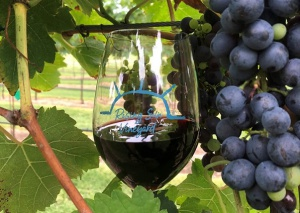 Wine glass in grapes and leaves on the vine