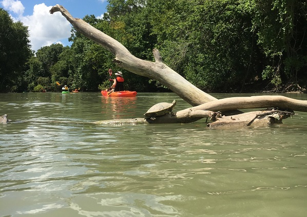 Kayaking the Colorado River in Bastrop County, Texas
