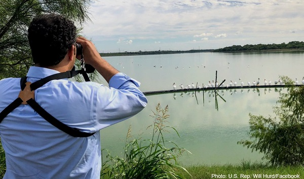 A man looking through binoculars at birds on the water's edge.